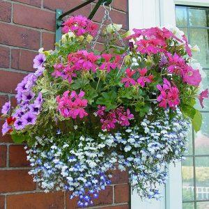Kompozycja z różnokolorowych kwiatów