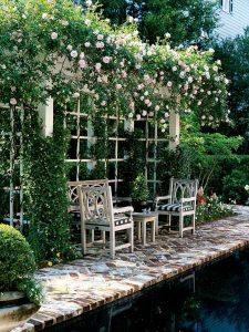 Białe róże pnące