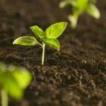 Typy gleb