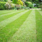 Trawniki z rolki
