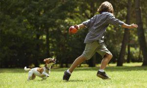 Zabawy z psem w ogrodzie