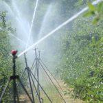 Nawadnianie sadów - systemy nawadniające sad nad i podkoronowe