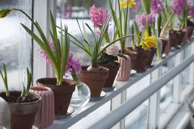 czyste powietrze w ekologicznym domu dzięki dużej ilości kwiatów