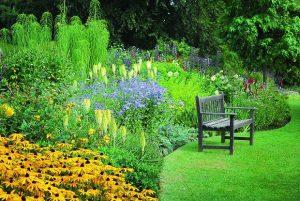 grządki rabatowe, na tle których stoi ogrodowa ławka
