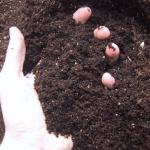 Ocena gleby