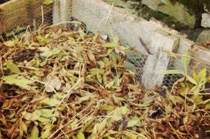 Kompost z liści