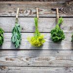 Kiedy zbierać zioła?